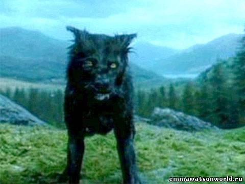 Harry Potter Azkaban Dog Breed